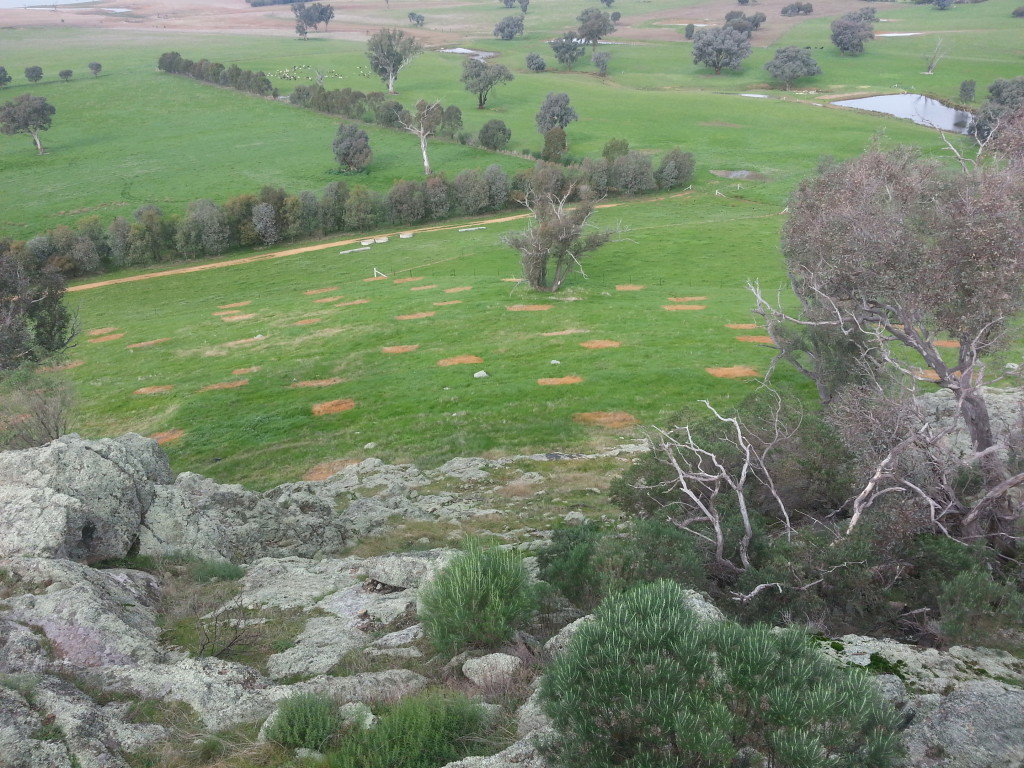Spot spray of areas of poor direct seeding results in readiness for hand seeding in August (June 2014, Joe Esler)