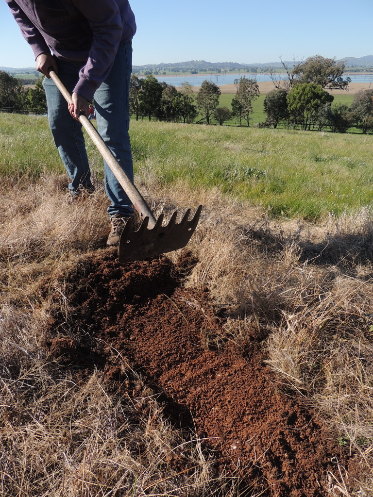 Preparing the soil for hand seeding of indigenous species at Table Top, NSW (Sam Niedra, August 2014)