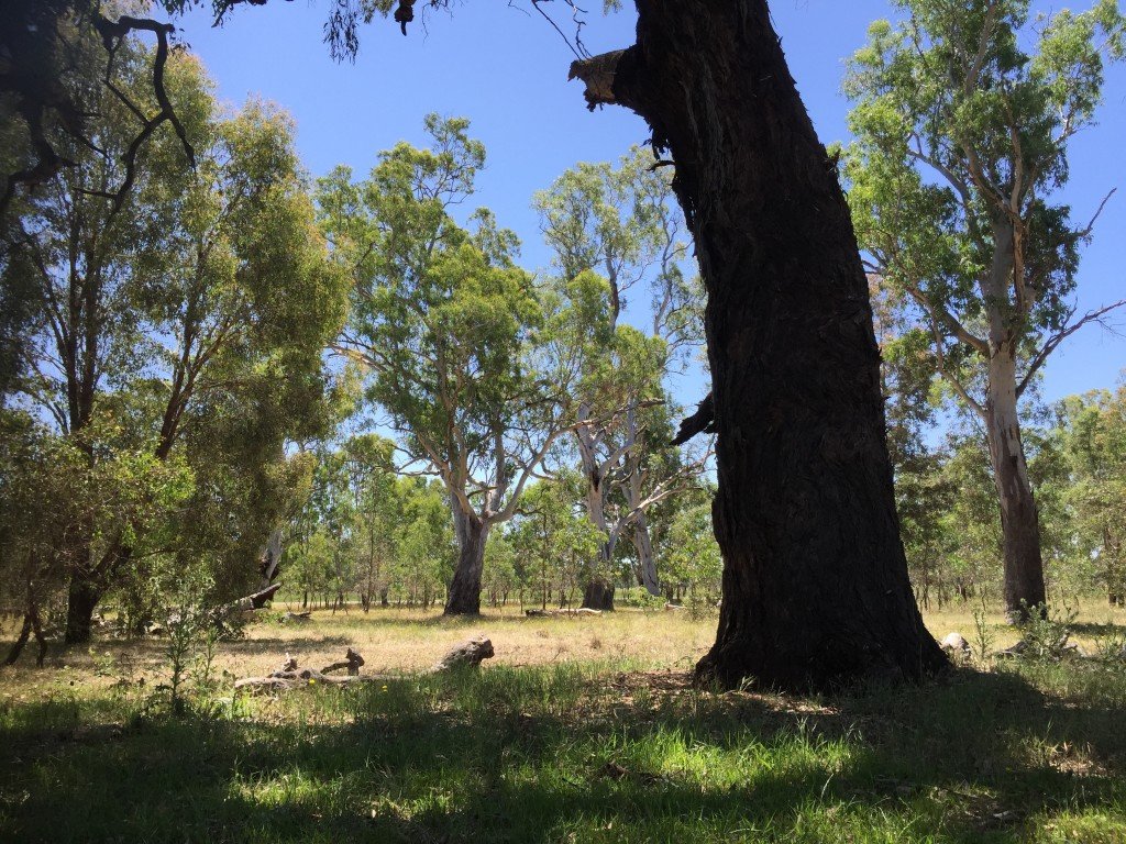 Hollow heaven at Bell's TSR, Thurgoona NSW