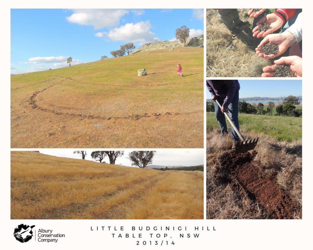 Little Budginigi Hill, Tabletop 201314