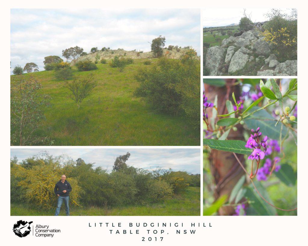 Little Budginigi Hill, Tabletop 2017