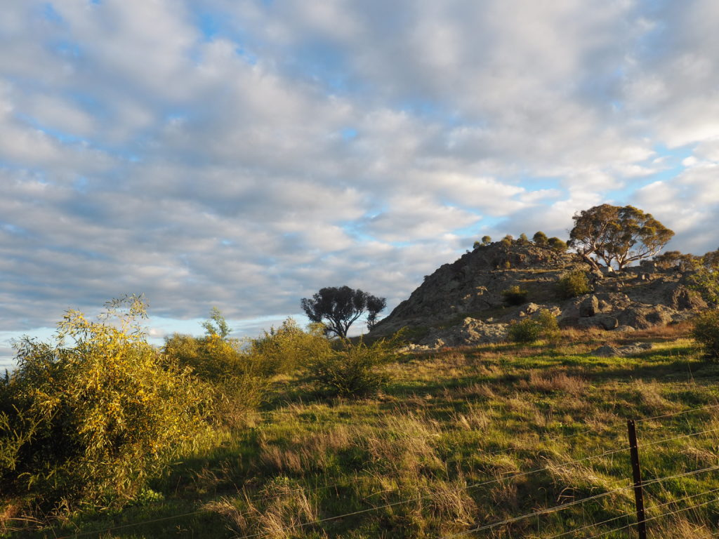Eastern side of Little Budginigi Hill, Tabletop NSW (Sept 2017)