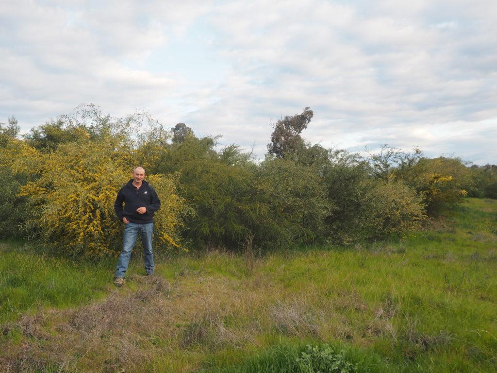 Joe Esler and native shrubs direct seeded in 2012 at Little Budginigi Hill, Tabletop NSW (Sept 2017)