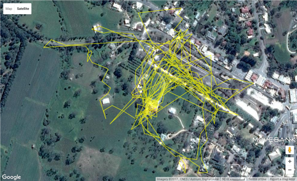 Cat-Tracker-example-TRACKS--Copyright-University-of-South-Australia (2)