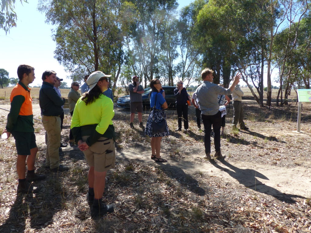 Hollow-bearing Tree (HBT) workshop, Albury - Site tour around Thurgoona / Wirlinga including Bells Travelling Stock Reserve at Table Top.