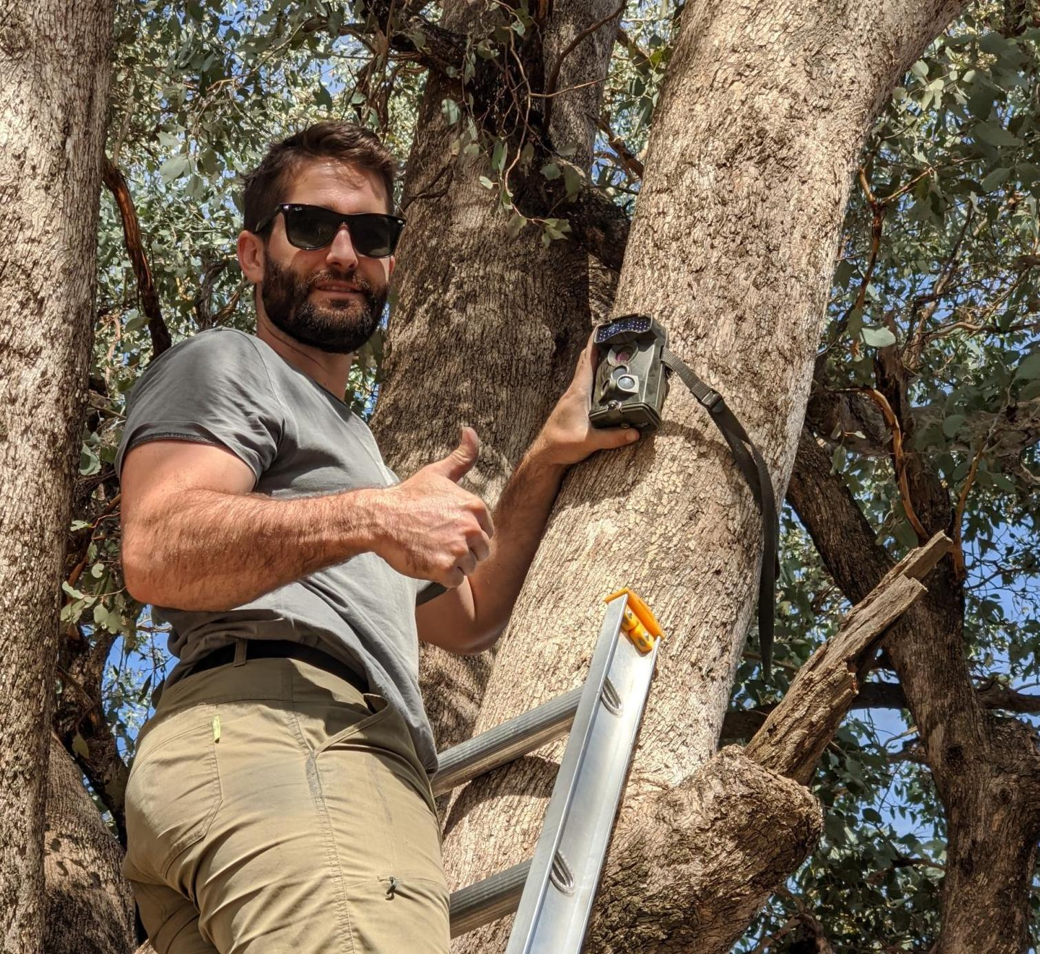 Albury Conservation Company's ecologist Dylan McWhinney installing a motion-sensing camera to monitor Squirrel Gliders in Thurgoona, NSW (2020)